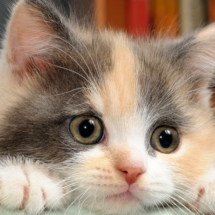 cropped-cat-wallpapers-for-desktop-2-1366x768-770958.jpg