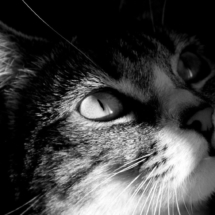 cropped-wallpaper-cats-4.jpg